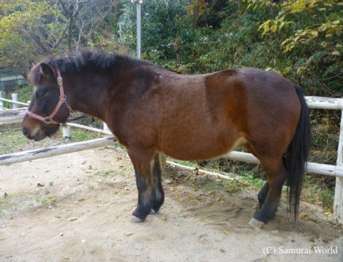 Kisouma, Samurai Horses